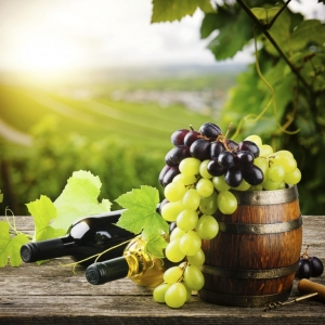Mountain Wineries & Vineyards