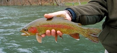 Appalachian Angler Outfitters & Guide Service