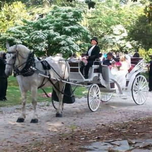 Carolina Horse and Carriage