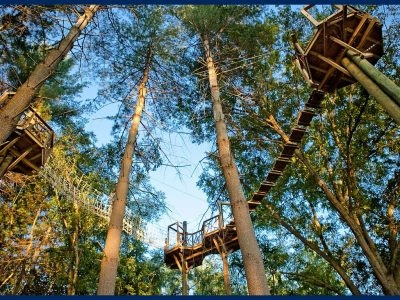 Beanstalk Journey Zip Lines