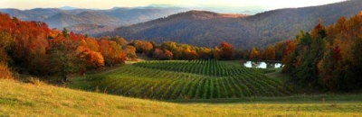New Burntshirt Vineyards in Hendersonville, NC