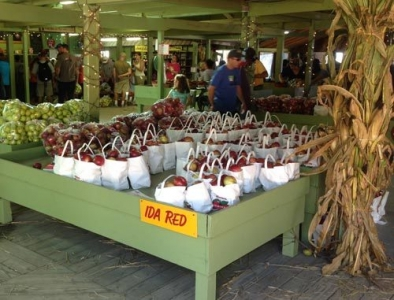 Pick Your Own Apples at Sky Top Orchards
