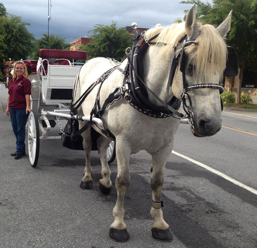 Carriage Rides on Main Street in Hendersonville, NC