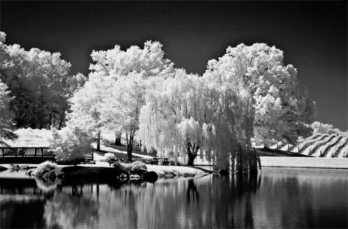 Click here to view the Black and White Infrared gallery by Sue Hershey.