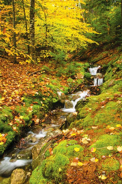 Jack Christfield's Photo of an Autumn Stream in Western North Carolina