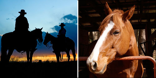 Horseback and Trail Rides in the Blue Ridge and Great Smoky Mountains