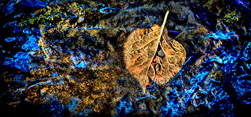 """Wishing Leaf"" Photo-of-the-Week"